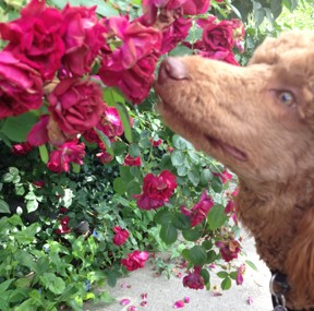 Today We Smell The Roses